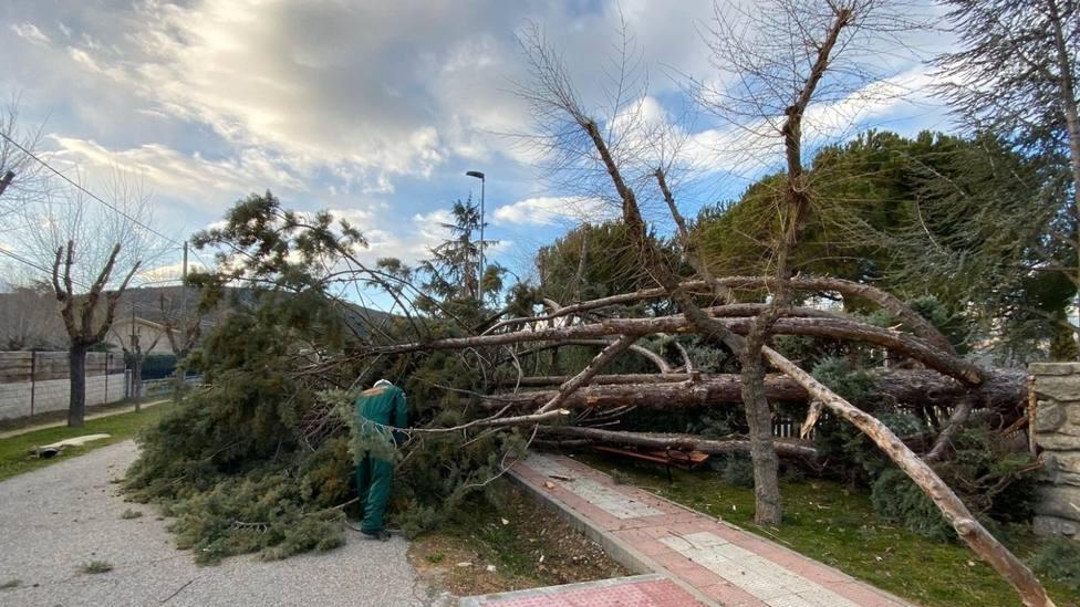 Árbol caído en la vía pública en Moralzarzal /FOTO: Protección Civil