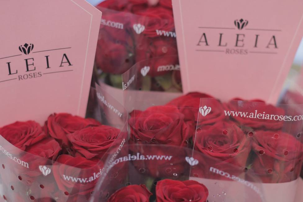 Rosas de la empresa Aleia asentada en la localidad soriana de Garray