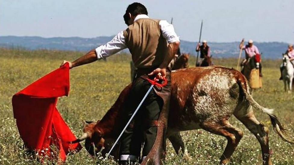 Pablo Aguado durante el tentadero a campo abierto que protagonizó en la ganadería de Miura