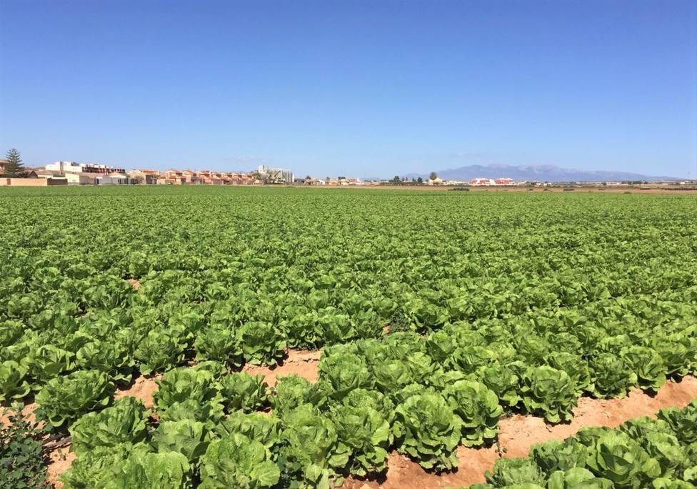 Jornada de puertas abiertas en los centros de investigación de semillas del Campo de Cartagena