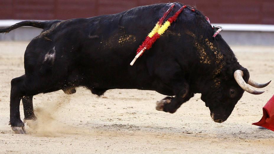 Los secretos de la embestida del toro de lidia contados por Fernando Gil-Cabrera