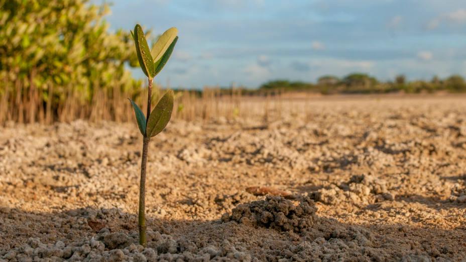 Cómo afecta la sequía al campo español