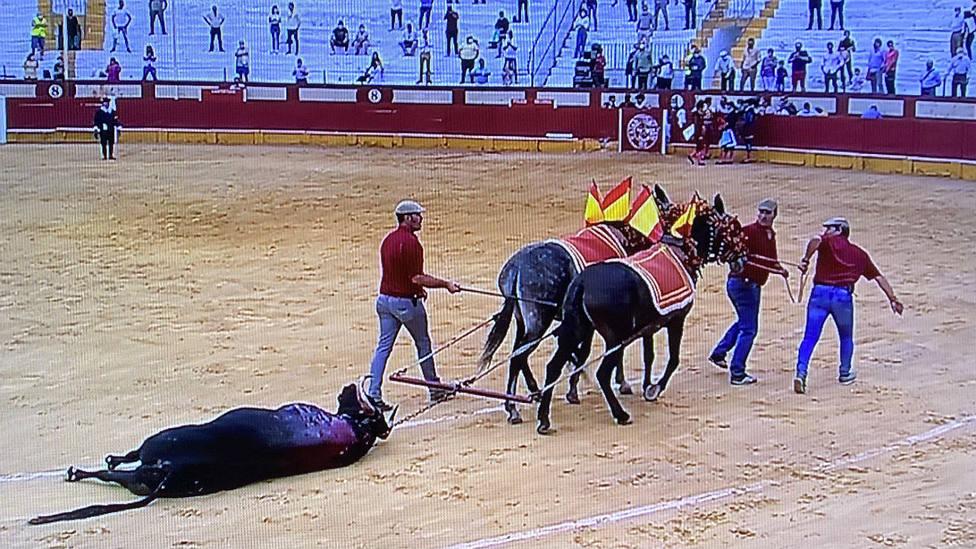 Vuelta al ruedo al toro Emperador de Santiago Domecq en la plaza de Cabra