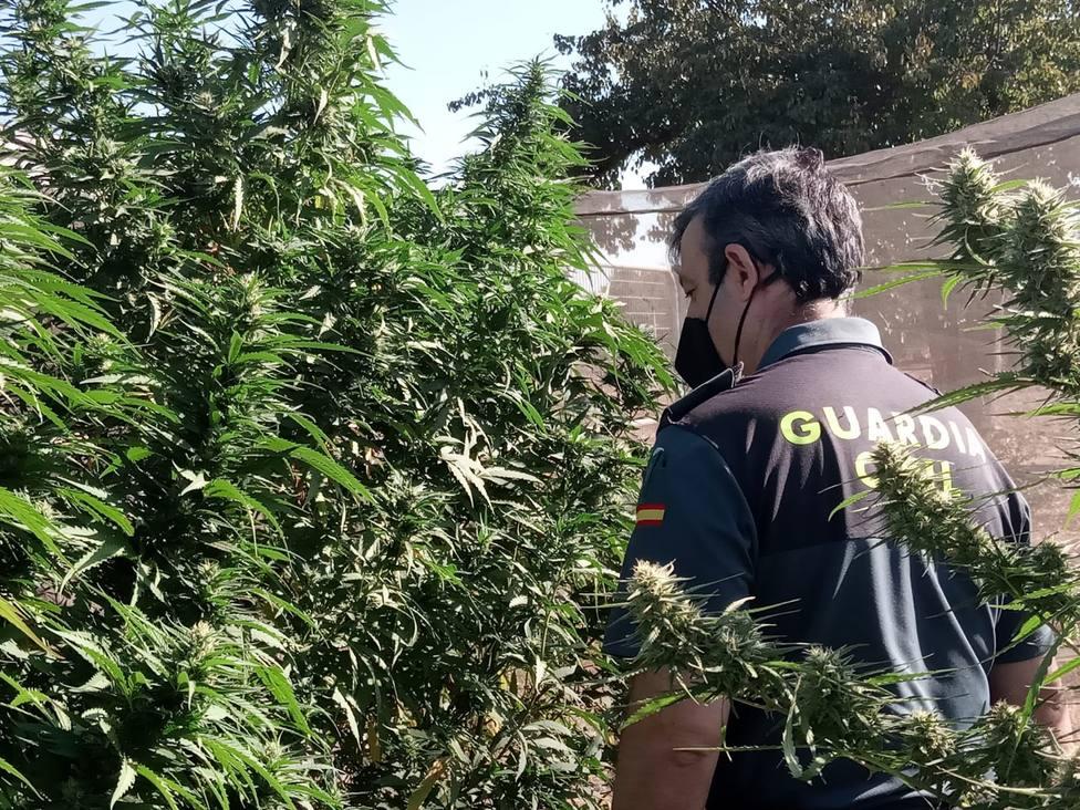 ctv-qqw-marihuana-baos-de-la-encina