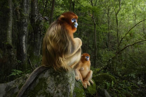 Llega a Madrid la exposición fotográfica sobre naturaleza Wildlife Photographer of the Year