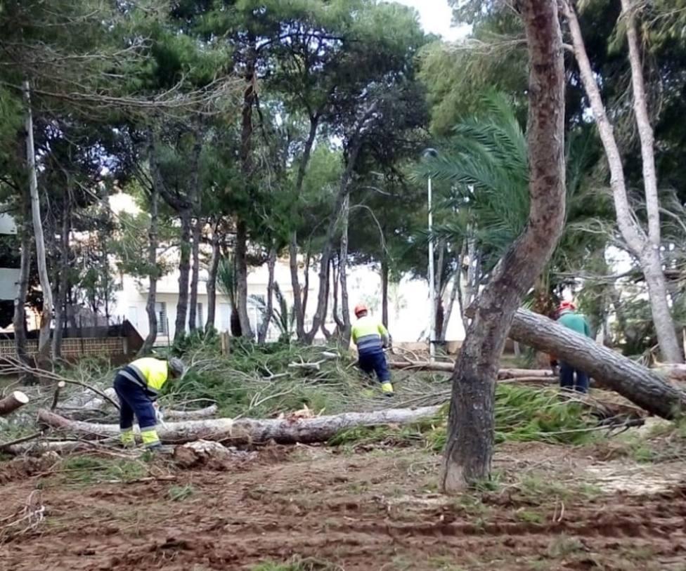 La borrasca Gloria tiró ochenta árboles en el municipio de Cartagena