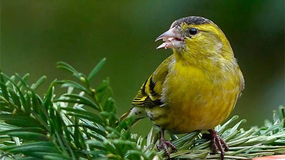¿Por qué cantan los pájaros?