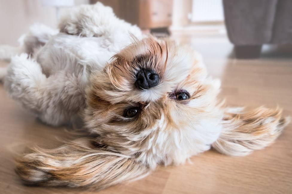 El perro que antes de dormir la siesta deja a todo el mundo con la boca abierta