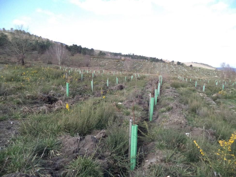 Plantaciones realizadas en Farelo y Novelúa