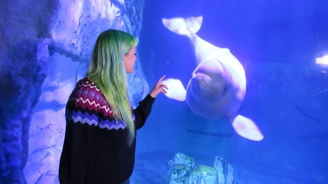 Un bebé beluga aprende de su madre una llamada acústica a modo de apellido familiar