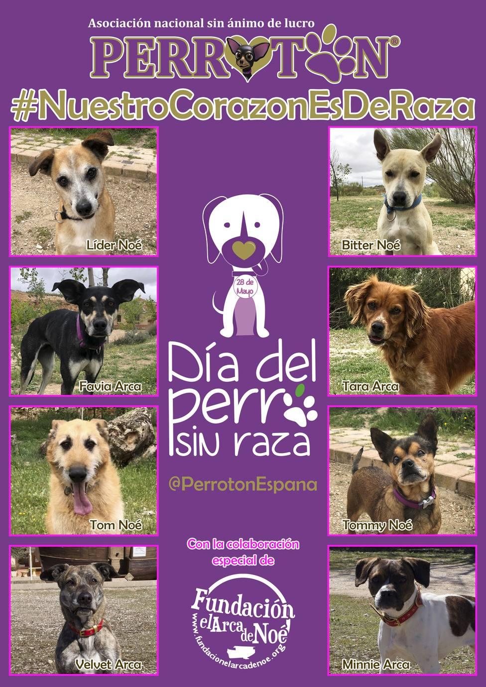 Perrotón lanza una campaña para promover los perros sin raza, más resistentes a enfermedades