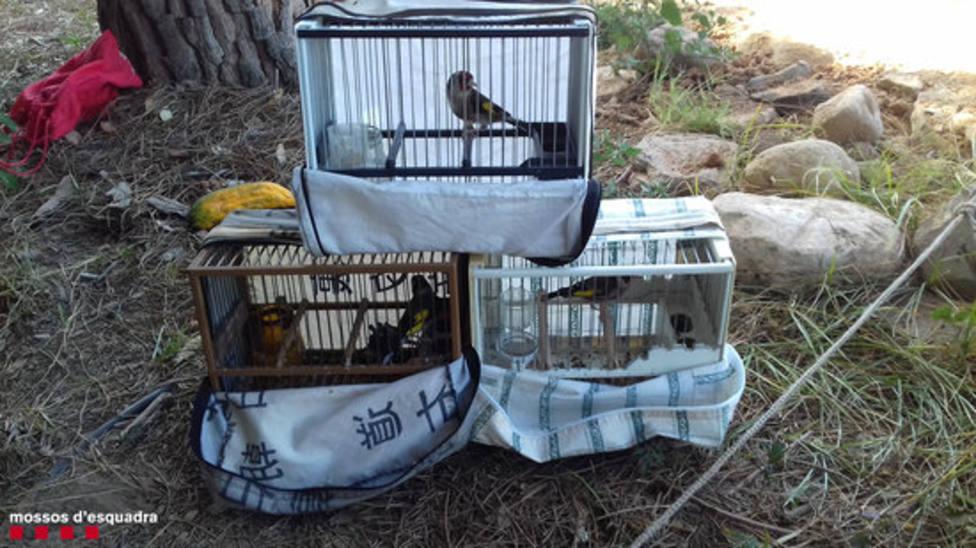 Aves caderneras recuperadas del cazador furtivo