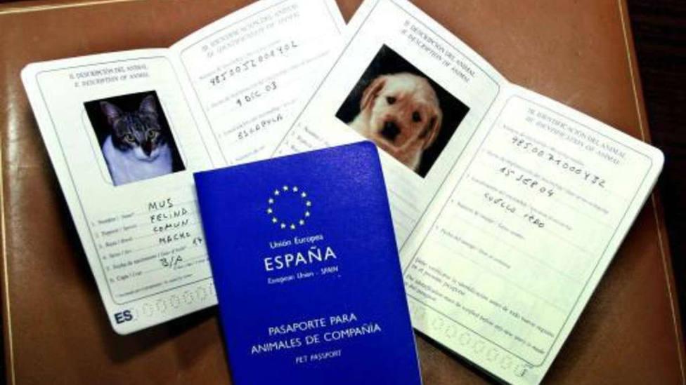 ¿Por qué tu mascota debe viajar también con pasaporte?
