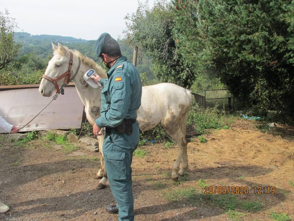 La Guardia Civil identifica a la persona que fue grabada golpeando a un equino en Lugo