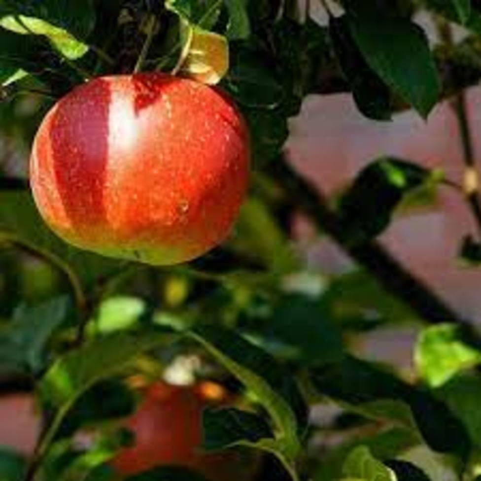 ctv-s2o-foto-fruta