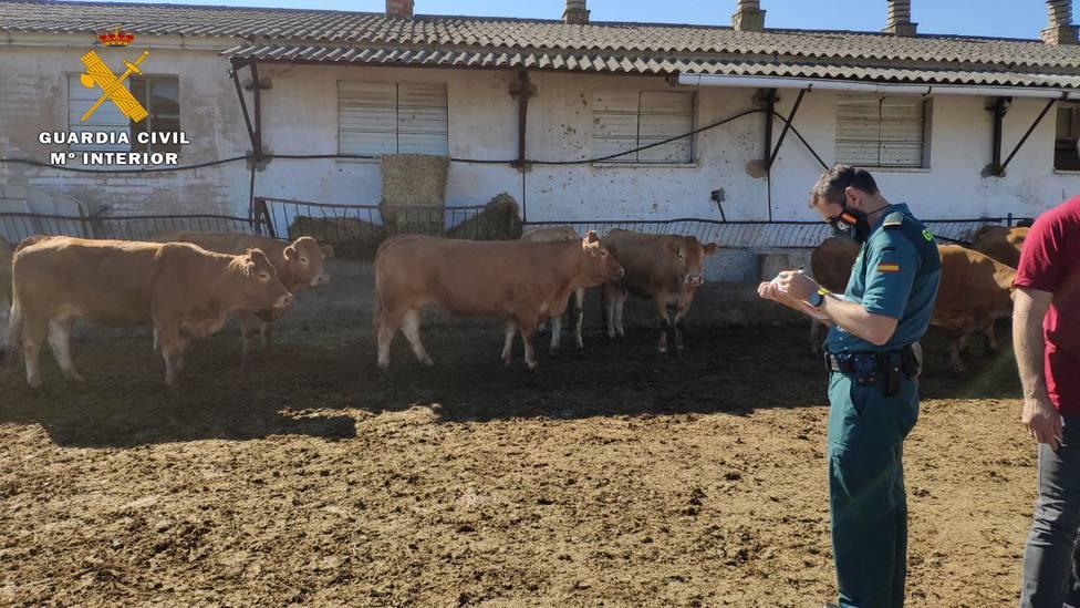 La Guardia Civil investiga a un ganadero de La Rioja por el robo de siete vacas y dos terneros