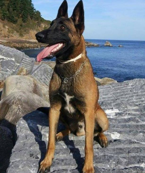 Eno, perro de rescate de la Ertzaintza