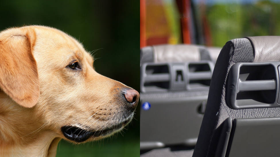 El motivo por el que este perrito sube a diario al autobús te romperá el corazón
