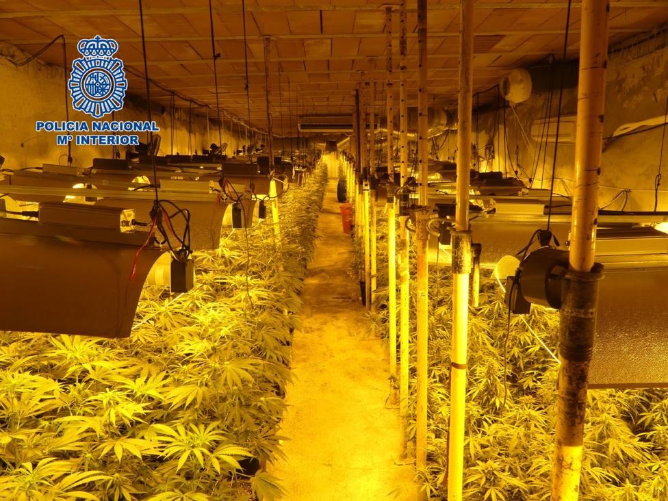 Desmantelada la mayor plantación subterránea de marihuana hallada hasta la fecha por la Policía Nacional