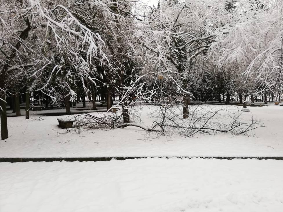 Caída de ramas en Salas