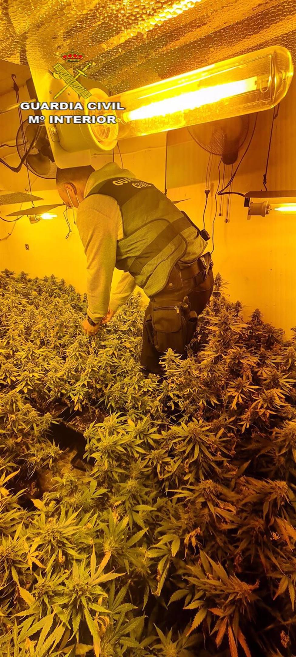 La policía localiza a un joven con 100 kilos de cogollos de marihuana envasados al vacío con destino a Chipre