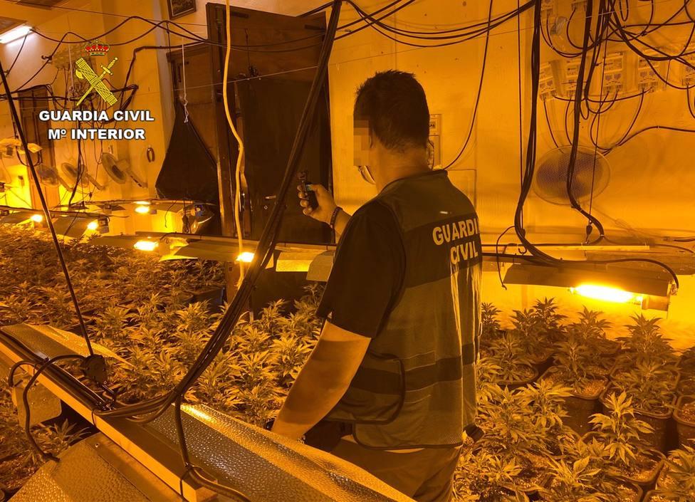Sucesos.- La Guardia Civil desmantela en Abarán una plantación indoor y detiene a sus dos responsables