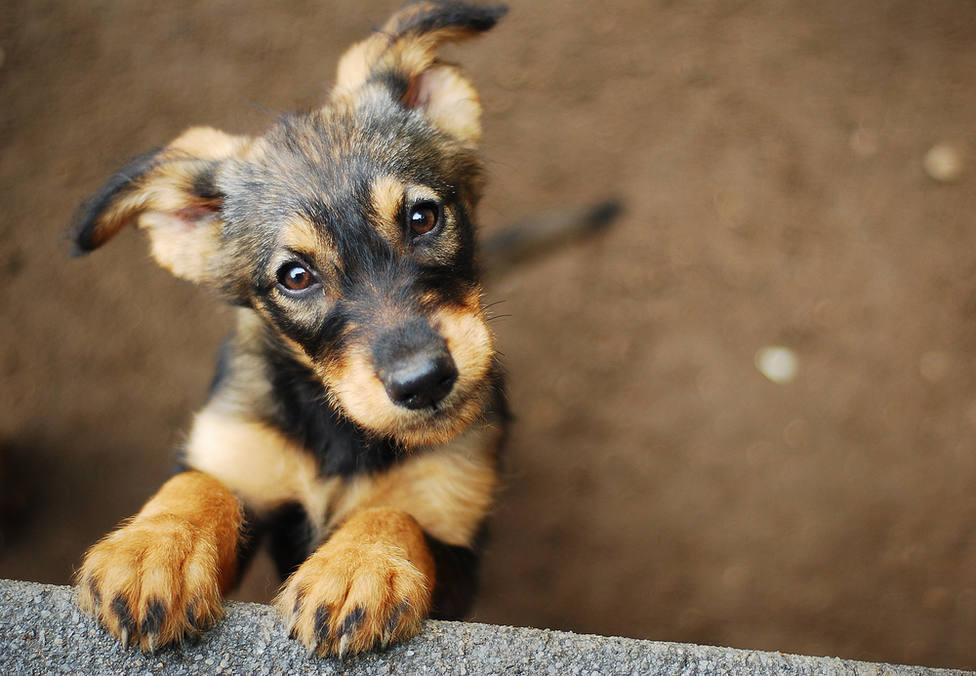 ¿Cuánto tiempo podré dejar sólo a mi perro en casa? Preguntas y respuestas sobre la nueva ley de animales