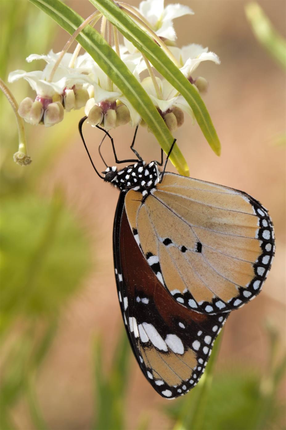 Publican 100.000 registros de invertebrados en un registro global de Biodiversidad ubicado en el Real Jardín Botánico