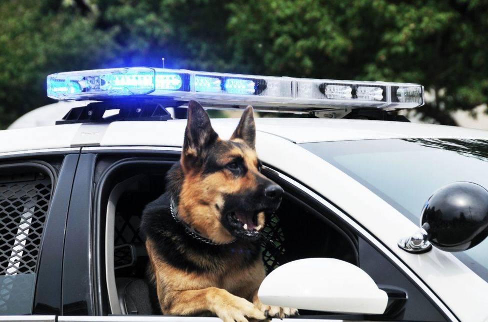 ¿Qué pasa con los perros policía cuando son jubilados?