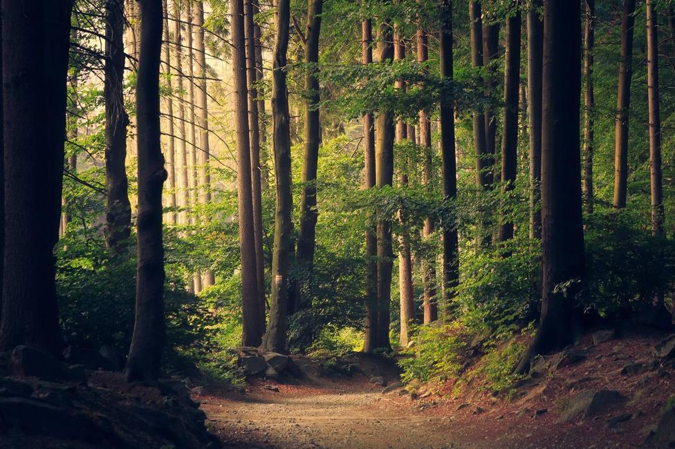 ctv-cnd-woods-945405 1920