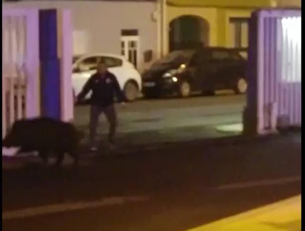 Un hombre trata de impedir que el jabalía abandonde el cuartel de San Xoán