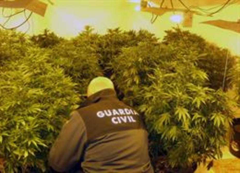 Desmantelan una plantación de marihuana en una vivienda ocupada ilegalmente por una joven pareja en Totana