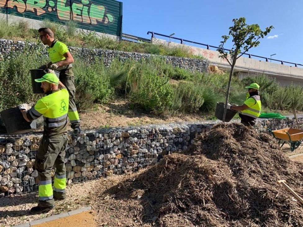 Parques y Jardines obtiene más de 100.000 kilos de mulching de las cañas extraídas del río tras la DANA