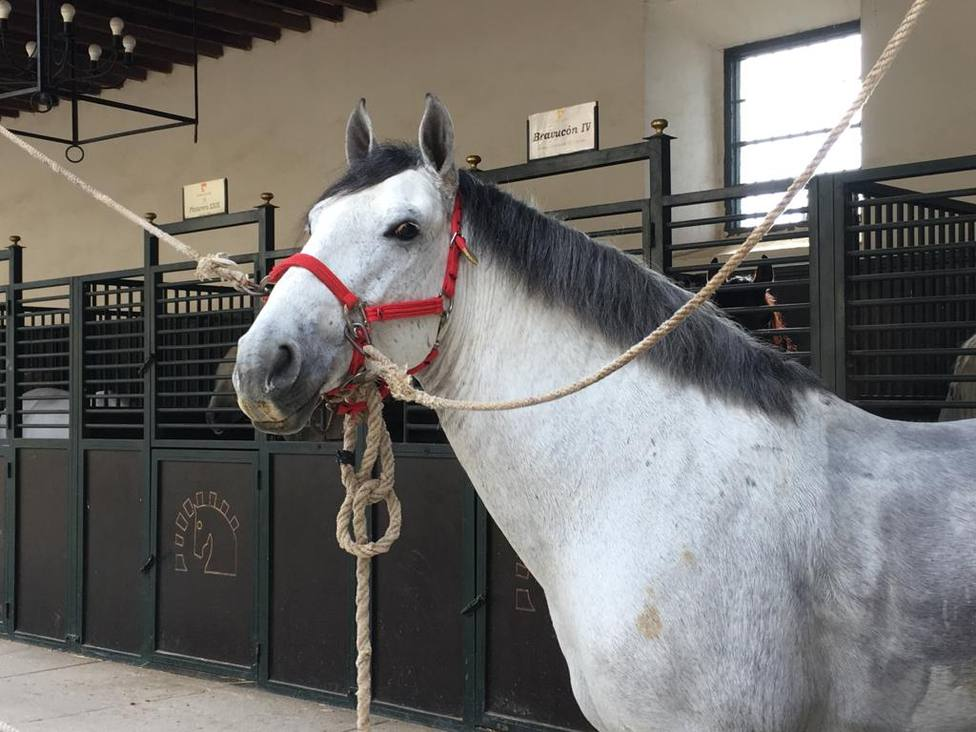 Córdoba viste sus calles con una marcha hípica formada por más de 200 caballos