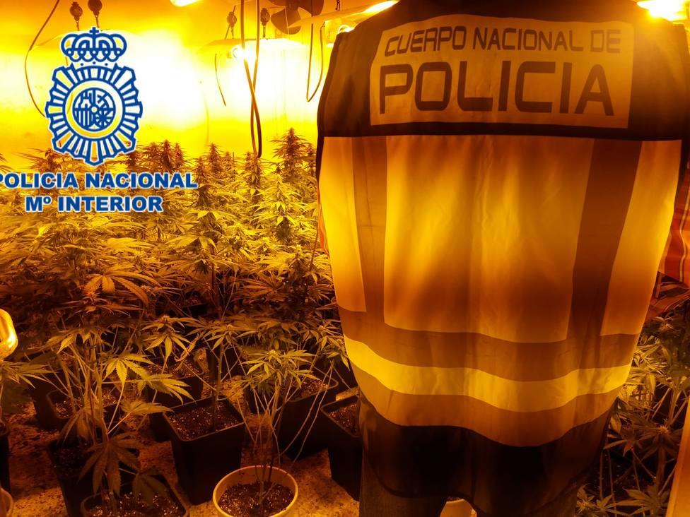 marihuana molino nuevo
