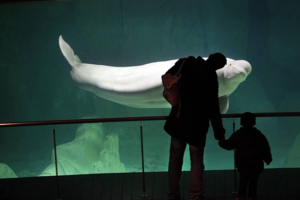 Estanque de las Belugas