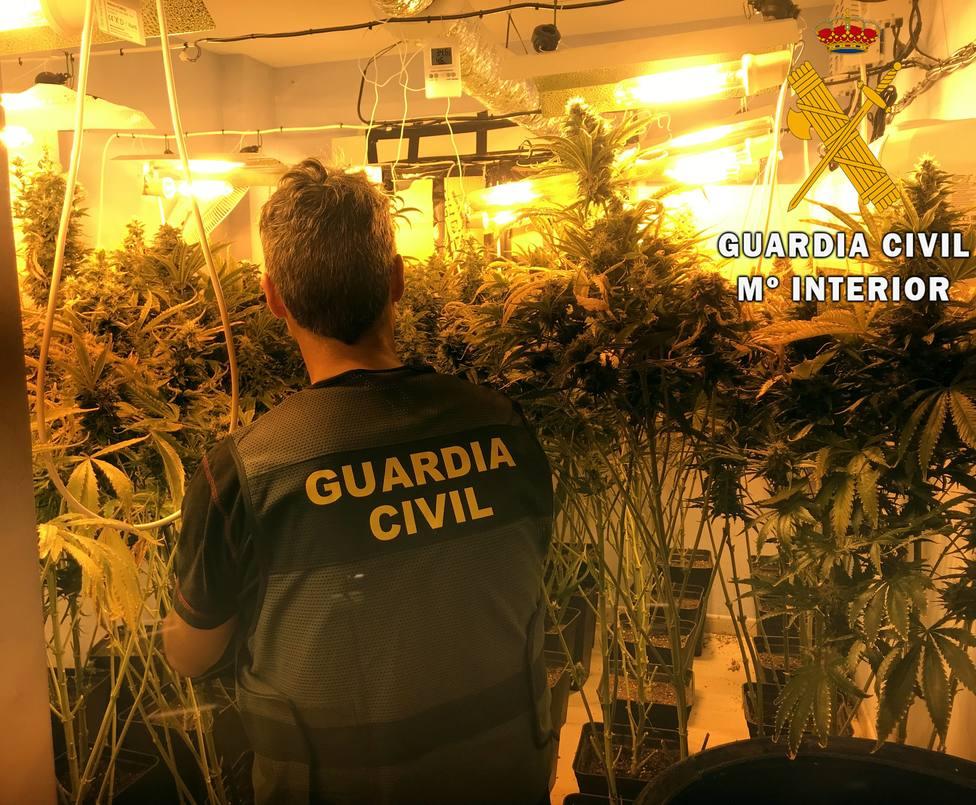 Localizan una plantación de marihuana tras el aviso del hallazgo de un cadáver en un piso de Roquetas