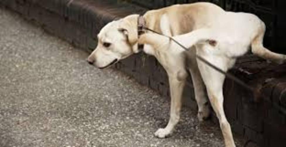 Perro orinando en calle