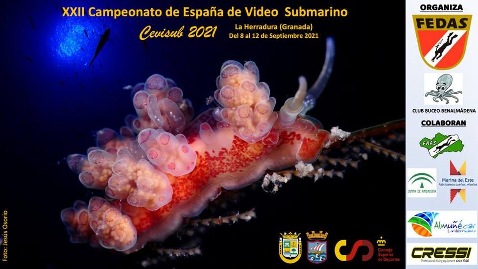 Se celebra en La Herradura el XXII Campeonato de España de Vídeo Submarino