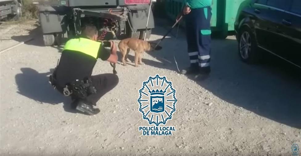 Momento de la captura del primer perro