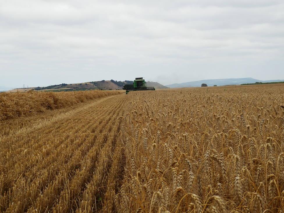 Finaliza la cosecha de cereal en La Rioja con un incremento generalizado de rendimientos en toda la región