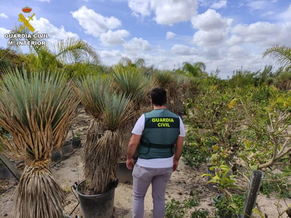 Detenido por robar 70 valiosas plantas de un vivero de Callosa de Segura