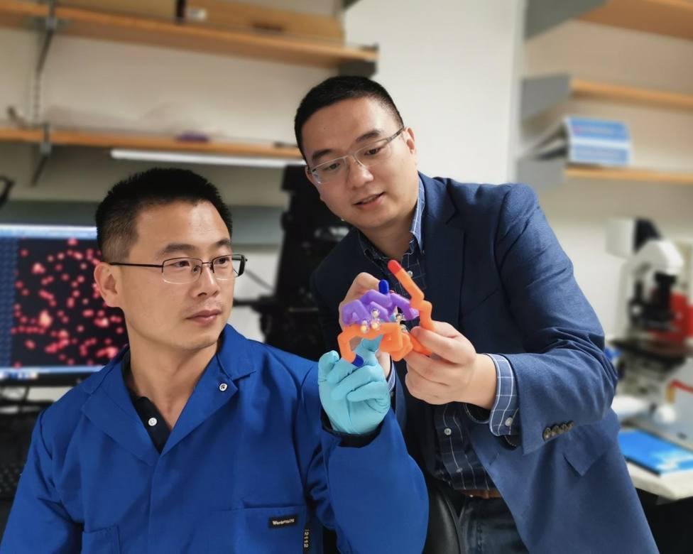 Crean un tipo de insulina inteligente que ayuda a prevenir la hipoglucemia en personas con diabetes