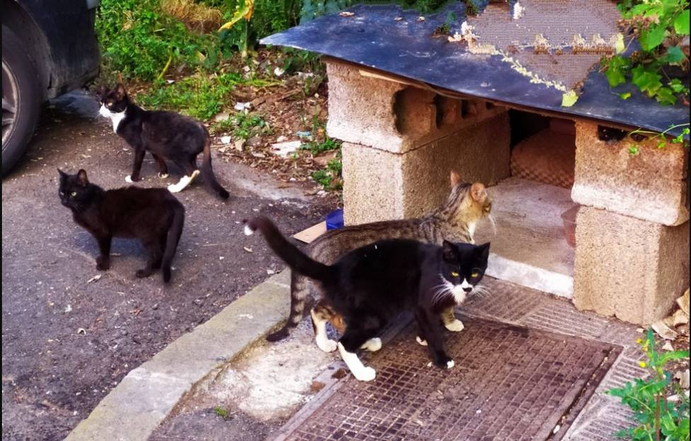 ctv-s62-gatos-la-orotava