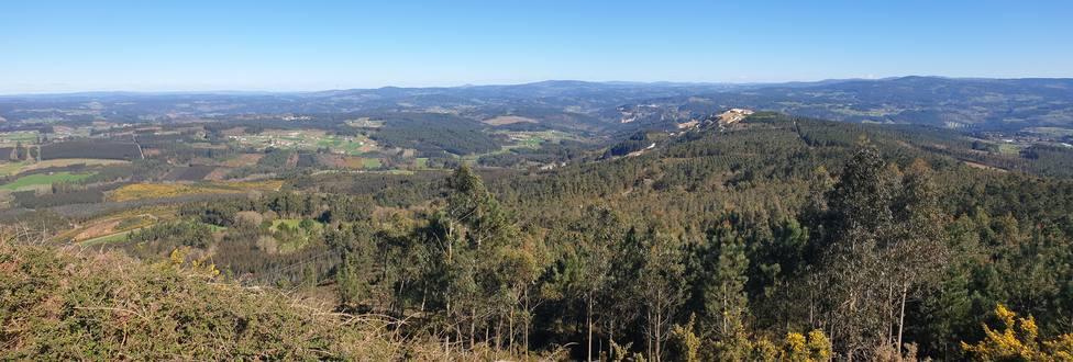 Ingenieros forestales demandan a las comunidades autónomas más inversión para la gestión forestal