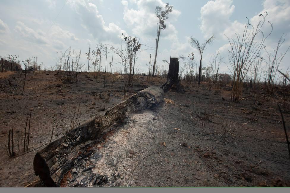 Cáritas expresa su cercanía a los afectados por los incendios en Gran Canaria y la Amazonía
