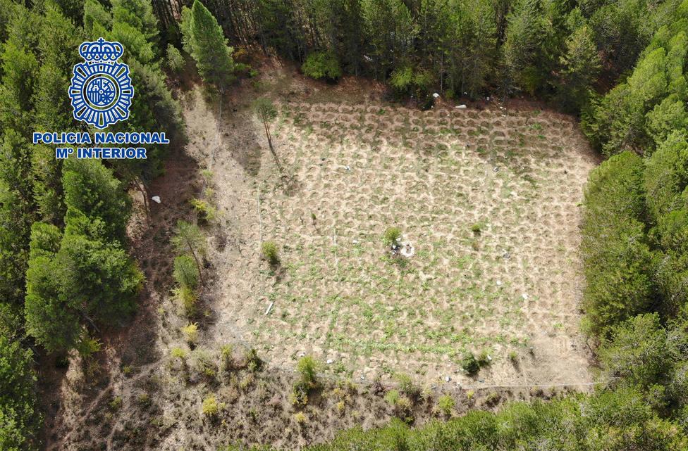 Intervenidas dos toneladas de plantas y cogollos gracias a la colaboración ciudadana