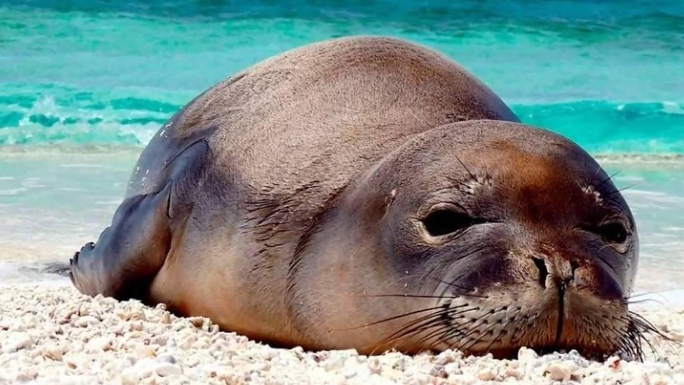La foto de una foca que se ha viralizado por su inquietante aspecto humano