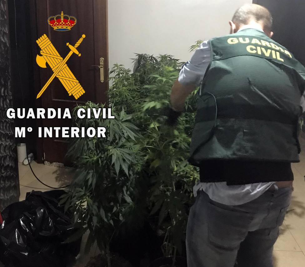 La Guardia Civil detiene a una persona y desmantela un cultivo de marihuana en Roquetas (Almería)