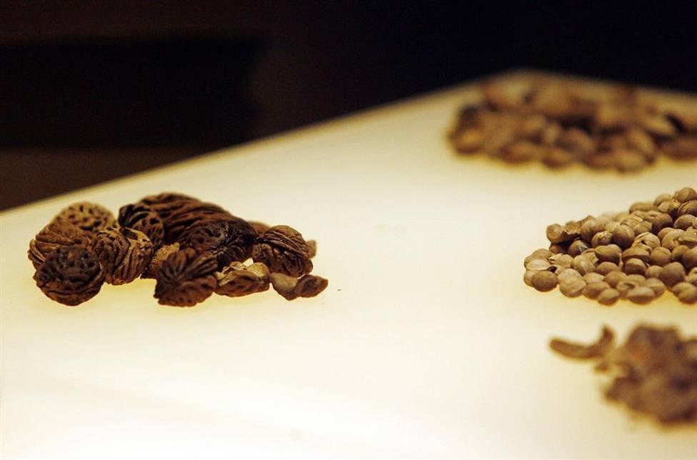 Unas semillas en una exposición